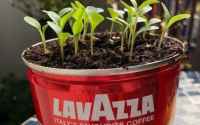 Lavazza et les projets de développement durable